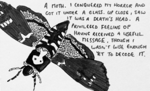 Illustration of a Death's Head Moth
