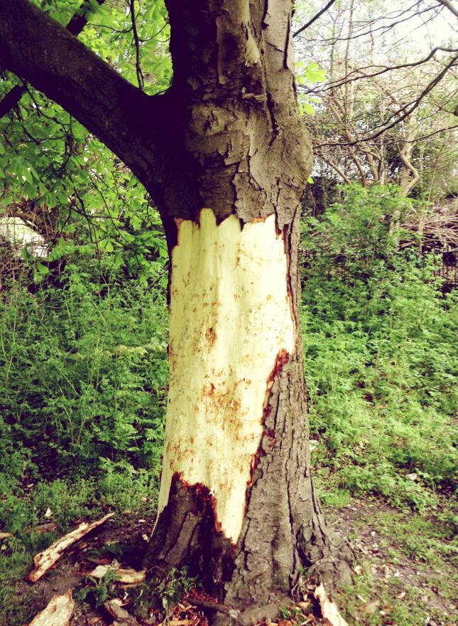 Flayed Tree