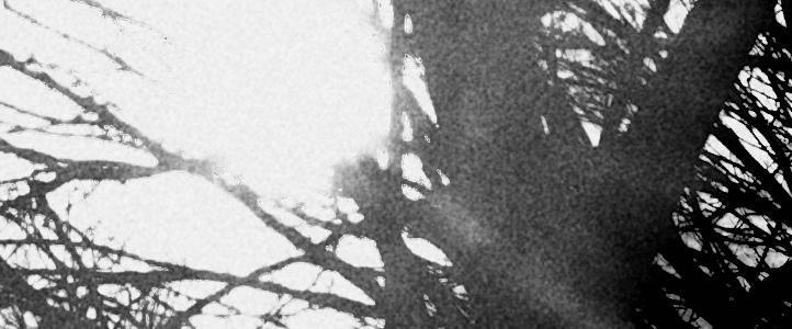 Inhabited Light