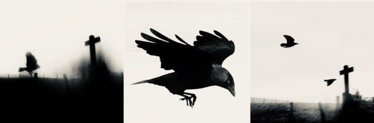 Birds of Firle - Credit Tanya Shadrick