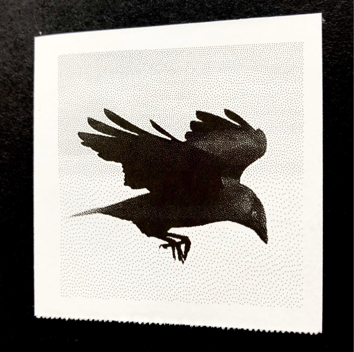 Birds of Firle - Jackdaw - Credit Tanya Shadrick