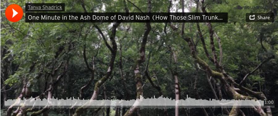 David Nash Ash Dome - Credit Tanya Shadrick